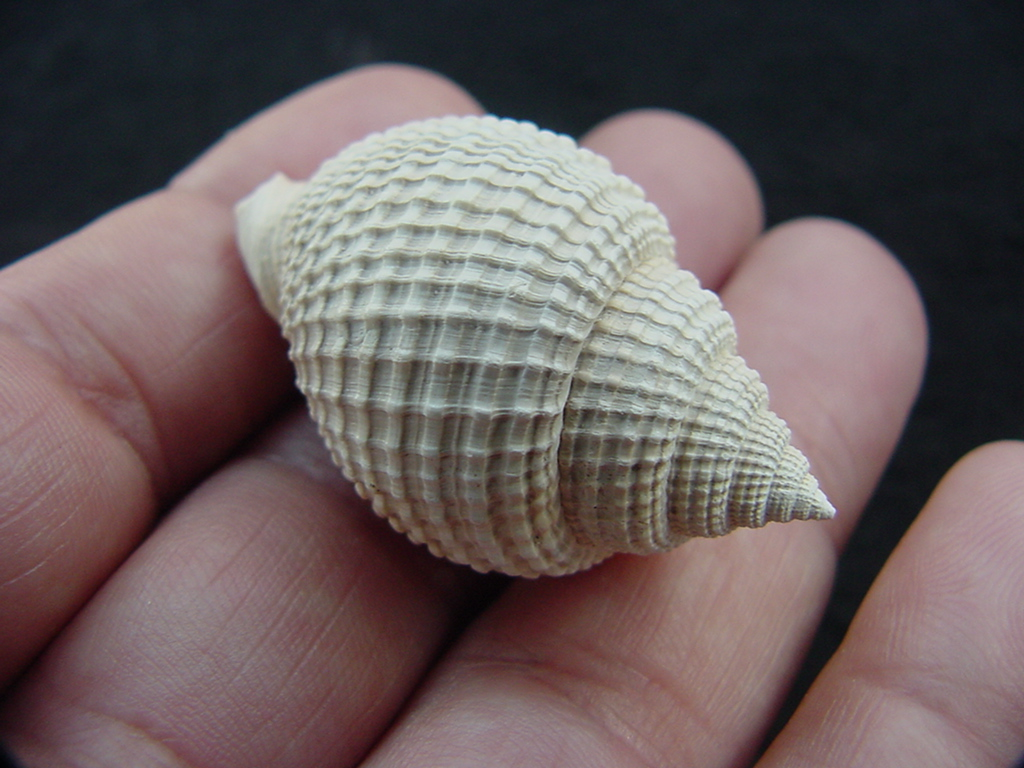 The Word Gastropod Means