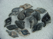 10 fossil garfish scales & 5 fossil tilly bones pack 1